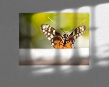 Mooie vlinder, gedetailleerd gefotografeerd.