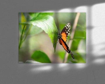 Mooi gekleurde vlinder hangend aan een groen blad.