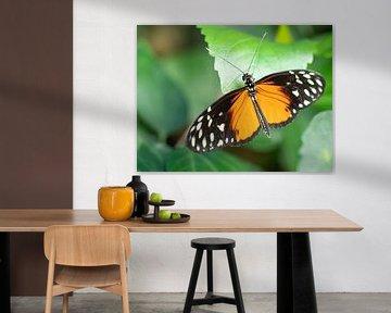 Mooi gekleurde vlinder hangend aan een groen blad. von Mariëtte Plat