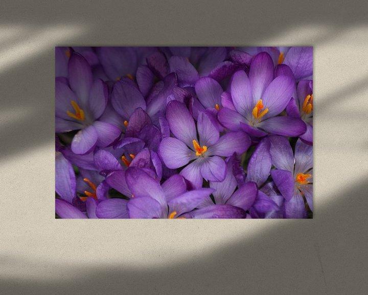Sfeerimpressie: Veld met paarse krokussen in detail van André Muller