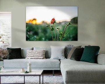 Rode Dahlia met waterdruppels von Wilko Visscher