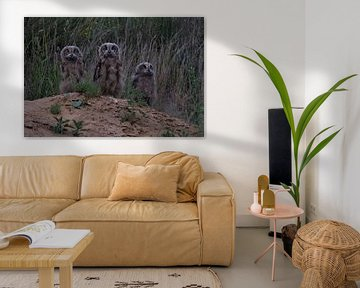 Eurasian Eagle Owls ( Bubo bubo ), three young chicks, standing on a little hill, looking brave, cou van wunderbare Erde