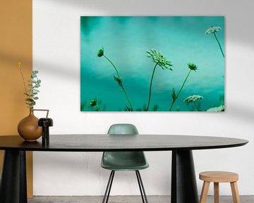 Weiße Blumen auf dem Wasser von Ellinor Creation