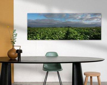 Blühende Kartoffelpflanzen von Bo Scheeringa Photography