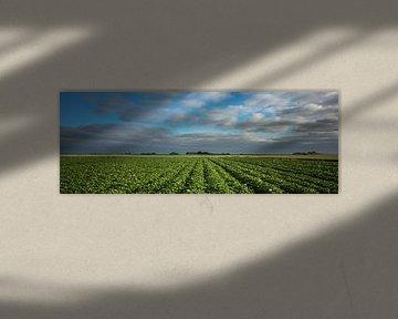 Kartoffelanbau von Bo Scheeringa Photography
