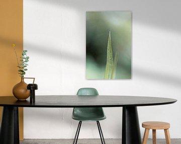 Blume XX - Bambus van Michael Schulz-Dostal
