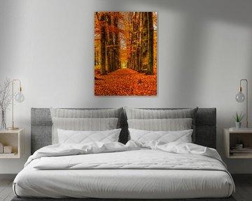 Thema: Herbst, Woudenberg, Die Niederlande von Maarten Kost