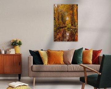 Theme:autumn, Scherpenzeel, The netherlands van Maarten Kost