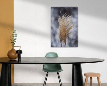 Grasplant in de wind van Ilse Rood