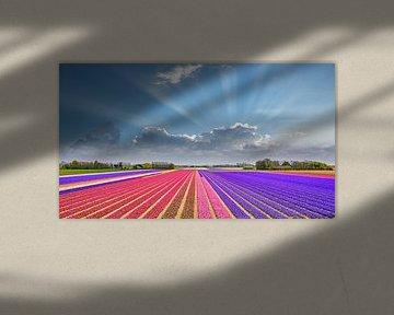 kleurrijk lente landschap van bloeiende hyacinten