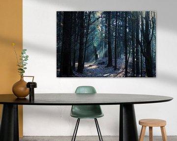 Lichtinval bos von Marloes Hoekema