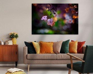 hortensia in het voorjaarszonnetje van Marloes Hoekema