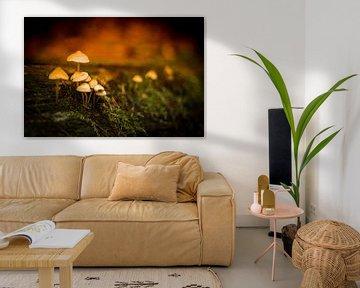 Mysterieuze paddenstoelen in het mos sur Marloes Hoekema