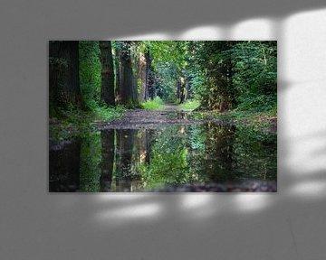bos in spiegelbeeld van Roger Janssen