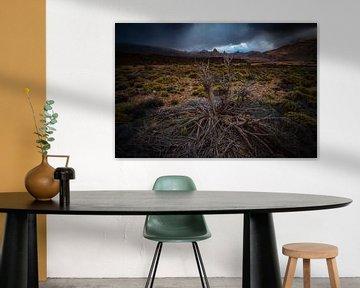 El arbusto moribundo van Joris Pannemans - Loris Photography