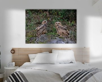 Two young Eagle owls / Europäischer Uhus ( Bubo bubo ) sitting next to each other on rocks of an old van wunderbare Erde