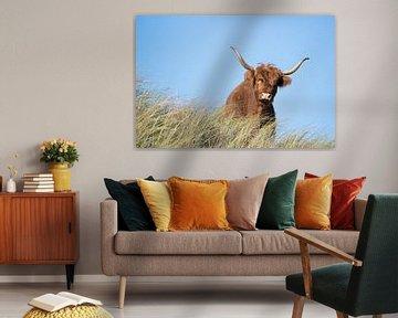 Schotse Hooglander van CreaBrig Fotografie