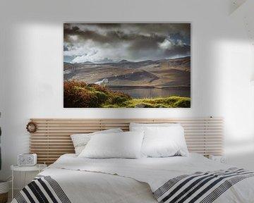 Een schaap in Schotland zijn von Fenna Duin-Huizing