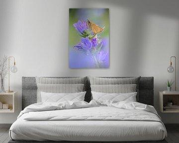 Butterfly, Essex Skipper ( Thymelicus lineola ) resting on colorful violett flowering Viper's Buglos van wunderbare Erde