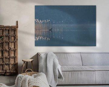 Plongeur à gorge noire ( Gavia arctica ) nageant à contre-jour par une journée brumeuse devant les r sur wunderbare Erde