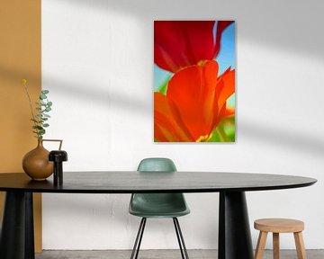 Rode tulpen van Anouschka Hendriks