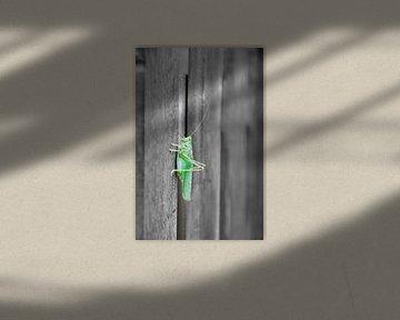 Groene sabelsprinkhaan op hekje van Ellinor Creation