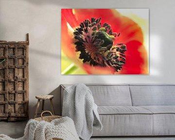 Blumen Anemonen Rotorange Schwarz Grün Nahaufnahme makro von Art By Dominic