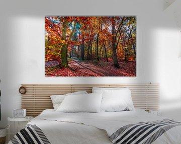 Licht in het herfstbos van Danny den Breejen