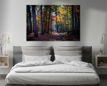 Herfst in Hollands bos van Danny den Breejen