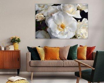 Blühende weiße Rosen von Ellinor Creation
