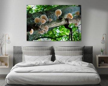 Pilze im Baum von Ellinor Creation