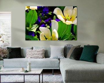 Farbe Explosion Blumenbeet von Ellinor Creation