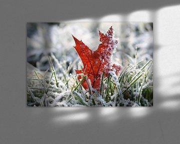 Eikenblad in het gras bedekt met rijp en sneeuw van Maarten Pietersma