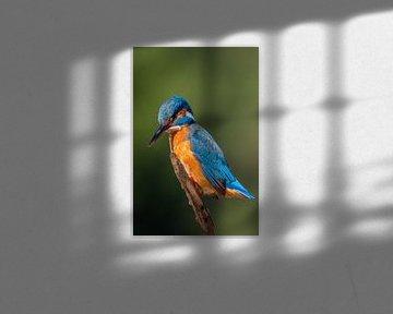 IJsvogel 2 van William Linders