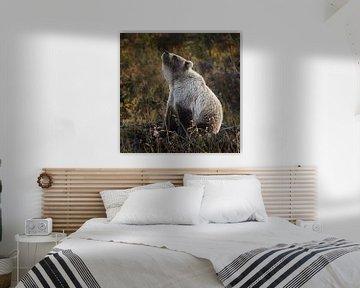 Grizzly beer ruikt iets