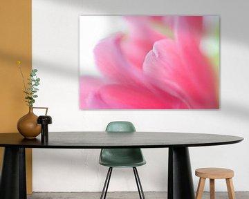 Roze gloed von Savo Fotografie