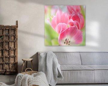 Bosje tulpen von Savo Fotografie