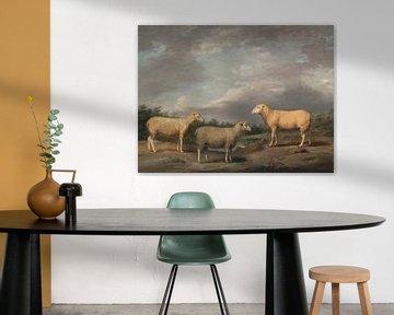 Drei Schafe, James Ward