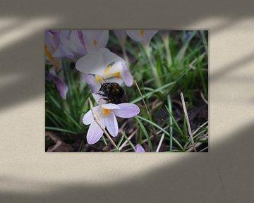 Hommel op bloem von Anne de Brouwer