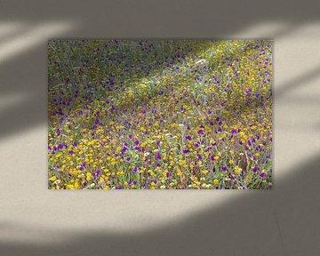 Bloemenweide von Paul Roholl