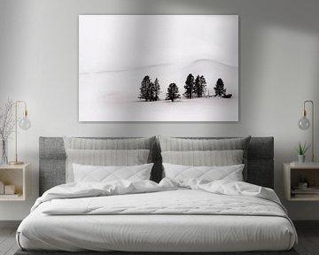 Groep dennen in winters Yellowstone National Park von Paul Roholl