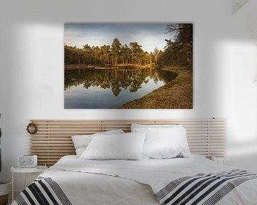 Birkhoven Bosvijver Reflectie II - Amersfoort, Nederland