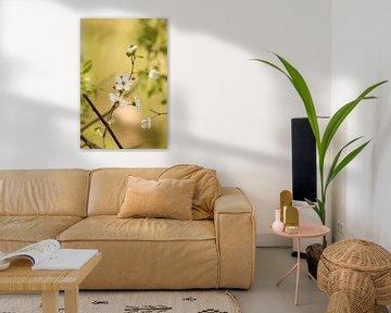 Bloesem in het bos, blossom, blühen, van Ina Roke
