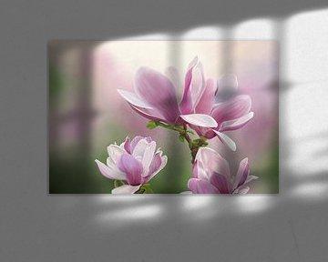 Schilderij van Magnolia bloemen