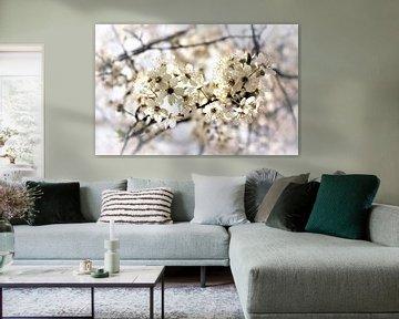 Bloesem, wit, , Blossom white,  blühen weiß van Ina Roke