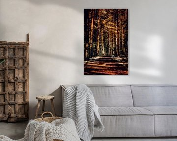 Light plays on a forest path van ♥️ photoARTwithHEART ♥️