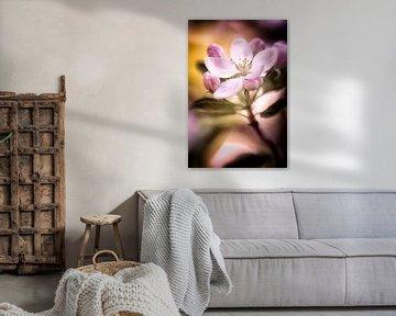 Apfelblüten im pinkfarbenem Licht von Nicc Koch