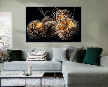 Früchte der Platane von Rietje Bulthuis