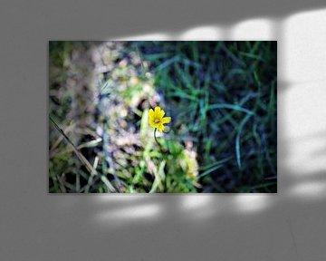 Boterbloem in het gras von DoDiLa Foto's