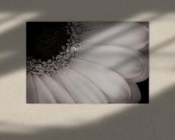 Blume (Gerbera) von Jefra Creations